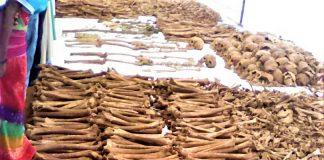 Les os des victimes excavées