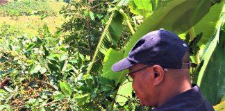 Déo Guide Rurema, le ministre en charge de l'environnement,l'agriculture et l'elevage lance la campagne café 2020-2021 en province Cibitoke.